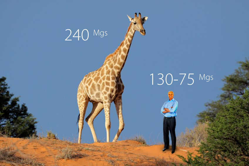 Image result for The giraffe has the highest blood pressure